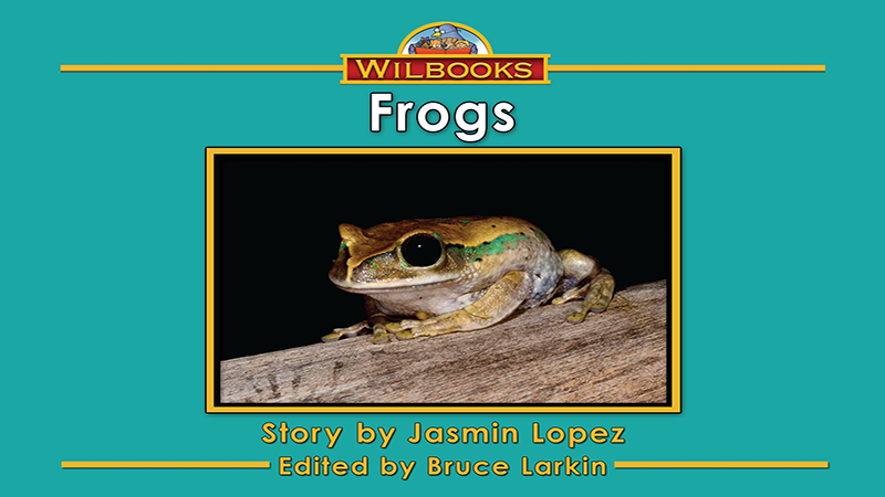 3719-XL8X Frogs_Page_01