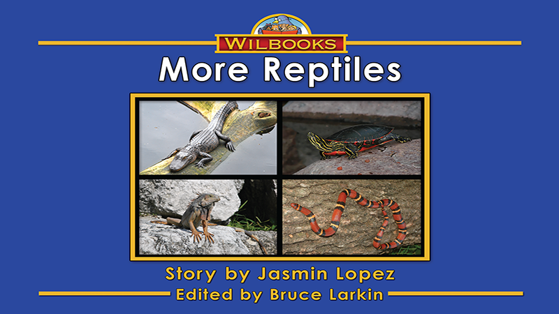 3727-XL8X More Reptiles_Page_01