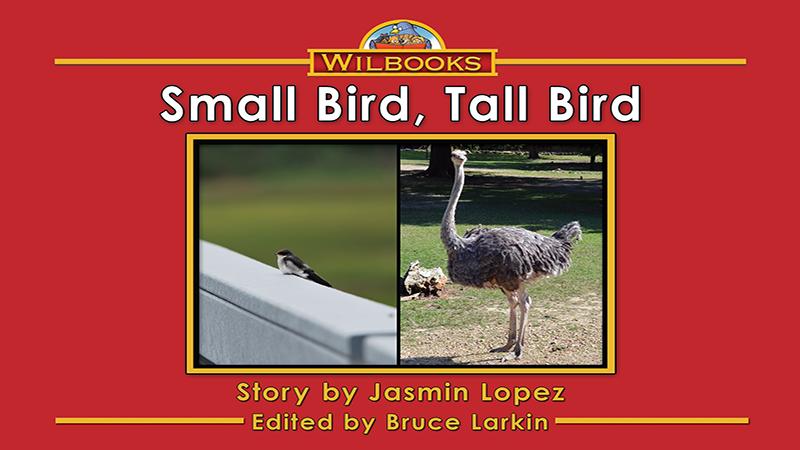 3729-XL8X Small Bird Tall Bird WEB_Page_01